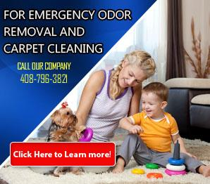 Mold Removal | Carpet Cleaning San Jose, CA